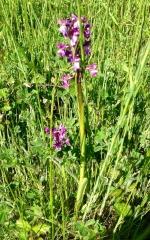 orchidées-martinie.jpg